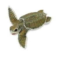 Safari Ltd 276829 Seestern 11 cm Serie Wassertiere Tiere & Dinosaurier
