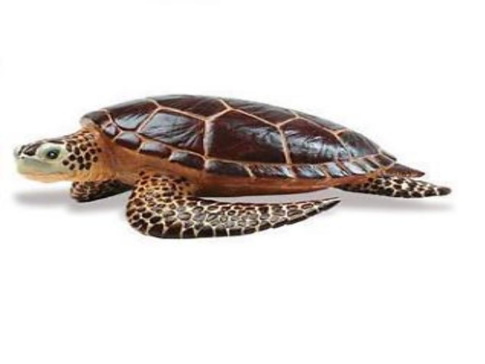 Meeresschildkröte 22 cm Serie Unglaubliche Kreaturen Safari Ltd 260429