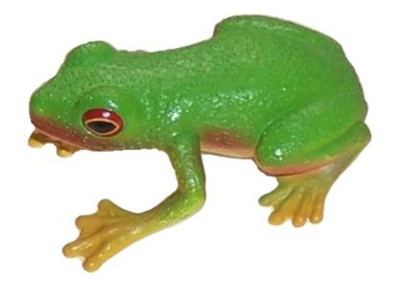 Animals of Australia Science and Nature 75342 Rotaugenlaubfrosch 4 cm