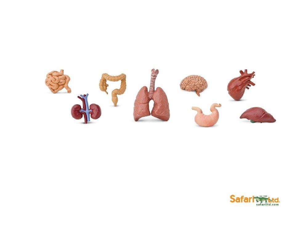 Safari Ltd 689304 Menschliche Organe (8 Minifiguren) Tubos-Röhren