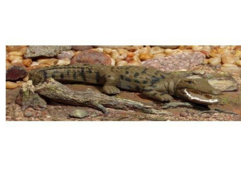 Animals of Australia Science and Nature 75460 Salzwasser Krokodil 14 cm