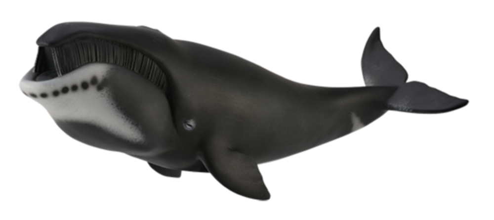 Collecta 88652 bowhead whale 22 cm Water Animals