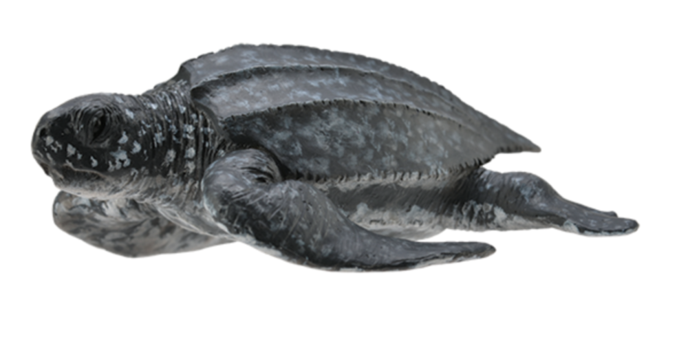 Collecta 88680 leatherback sea turtle 8 cm Water Animals