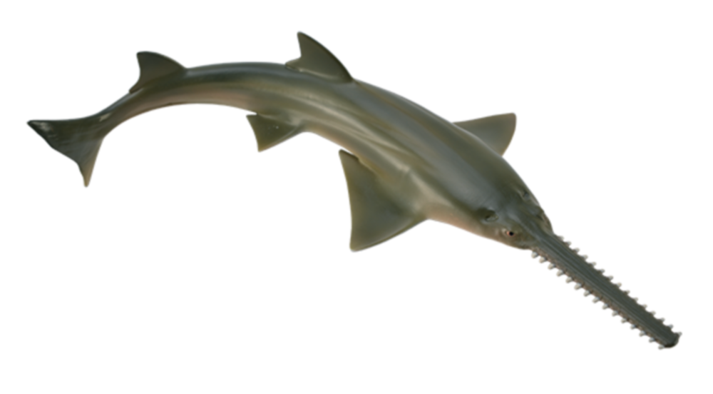 Collecta 88659 sawfish 16 cm Water Animals