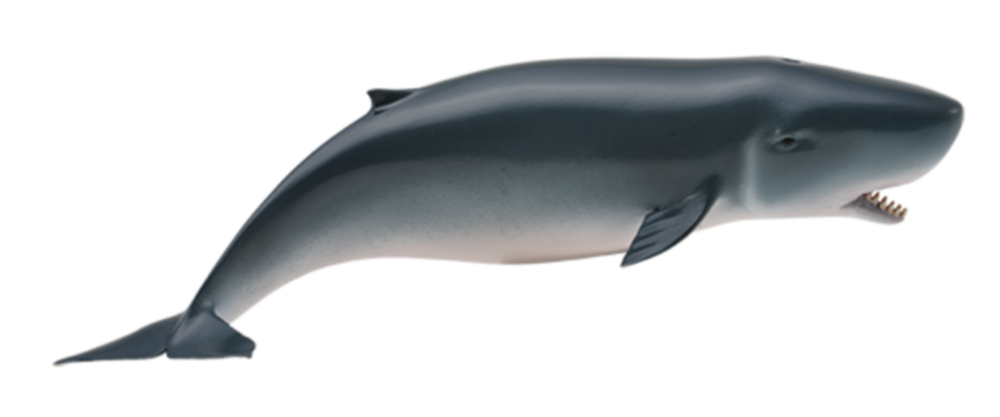 Collecta 88653 sperm whale 15 cm Water Animals