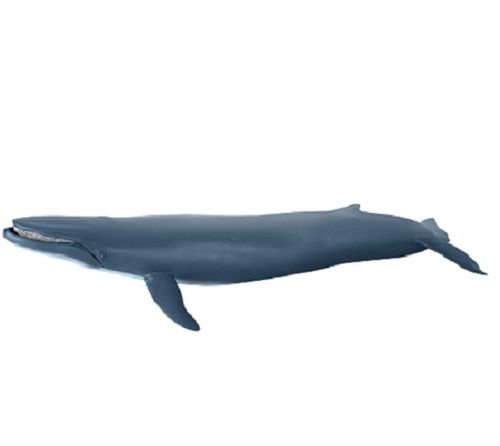 Papo 56037 blue whale 39 cm Water Animals