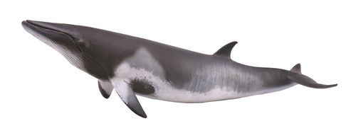 Collecta 88862 minke whale 19 cm Water Animals