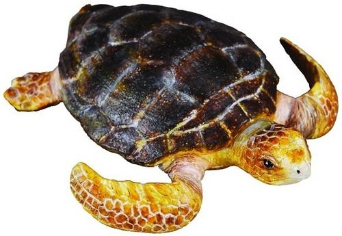 Collecta 88094 small musk turtle 7 cm Water Animals
