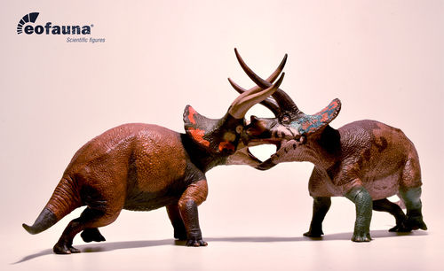"Eofauna Triceratops ""Dominat"" and Triceratops ""Cryptic"" world of dinosaurs"